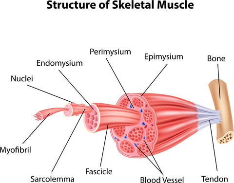 muscle soreness easyflexibility kinesiological stretching anatomy kinesiology structure injury prevention DOMS
