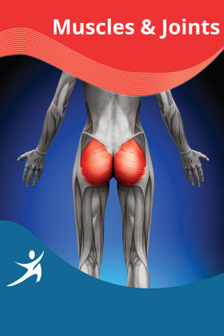Glutes, Adductors and Iliotibial Band