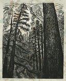White Pine Forest Fine Art Print Woodcut Color Background Green Deep Woods
