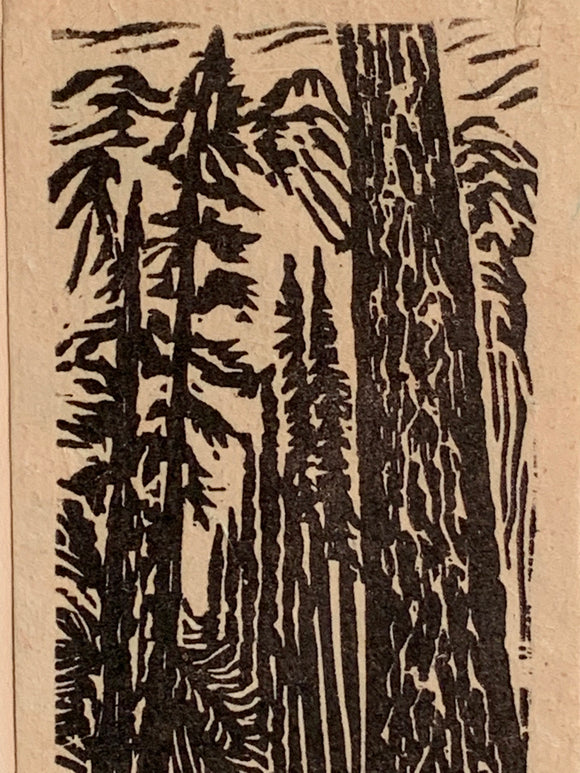 White Pine Tree Small Original Woodcut from Alpine Mountain Trees Landscape Collection