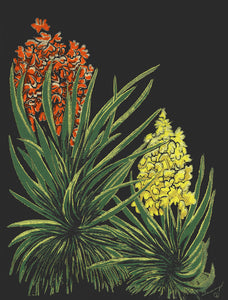 Flowering Yuccas Color Fine Art Print Southwest Bright Mojave Yucca Flowers
