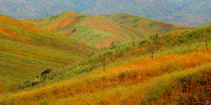 Colorfields I Fine Art Print Bright Meadow Hills Impressionism