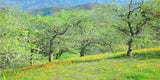 California Spring I Nature Fine Art Print Tree Landscape Green Yellow