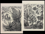 Woodcut Print Collectors Set Southwest Trees Nevada Desert SIX 6 Original Woodblock Prints Very Limited AP Edition