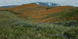Moody Weather Rust Green Meadow Hills Mountain Colorfields V Fine Art Print