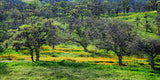Fine Art Print Tree Landscape Bright Meadow Impressionism Tree