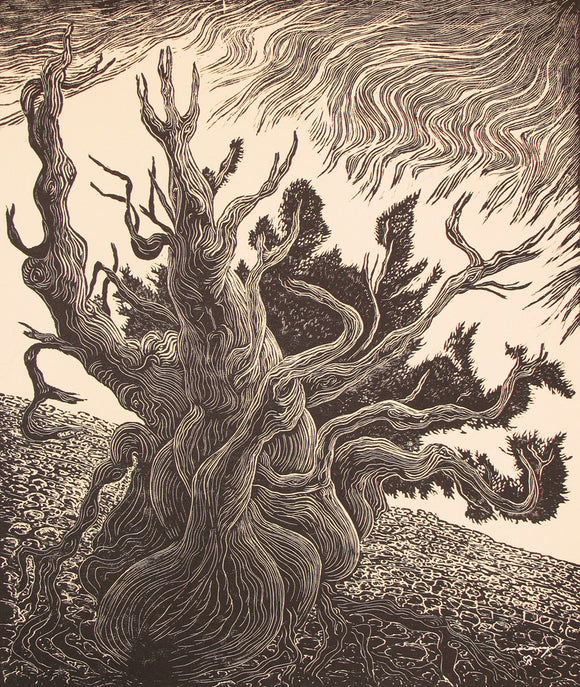 Bristlecone Pine Old Man Timberline Traveler Mountain Art Print Wood Engraving