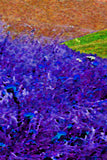 Abstraction Fine Art Print Purple Meadow Mountains Colorfields III