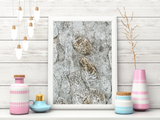 Abstract Nature Organic Fine Art Print Beige Tan Natural Fossil Texture
