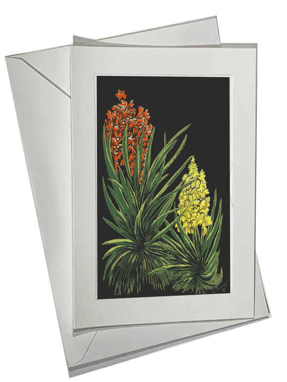 Flowering Yuccas Color ART CARD Southwest Bright Mojave Yucca Flowers