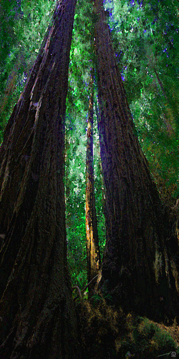 Light Ray Redwoods IV Sky Reach Pure Green Fine Art Print