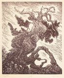 Wood Engraving Story Teller Twisted Ancient Bristlecone Pine White Mountains Sierra