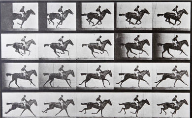 EADWEARD MUYBRIDGE (British, 1830-1904) Horse at Gallup, 1979.