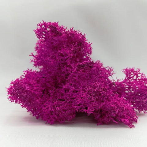 Image of Moss Garden Wall Flower Material Natural Reindeer Moss Micro Landscape Accessories