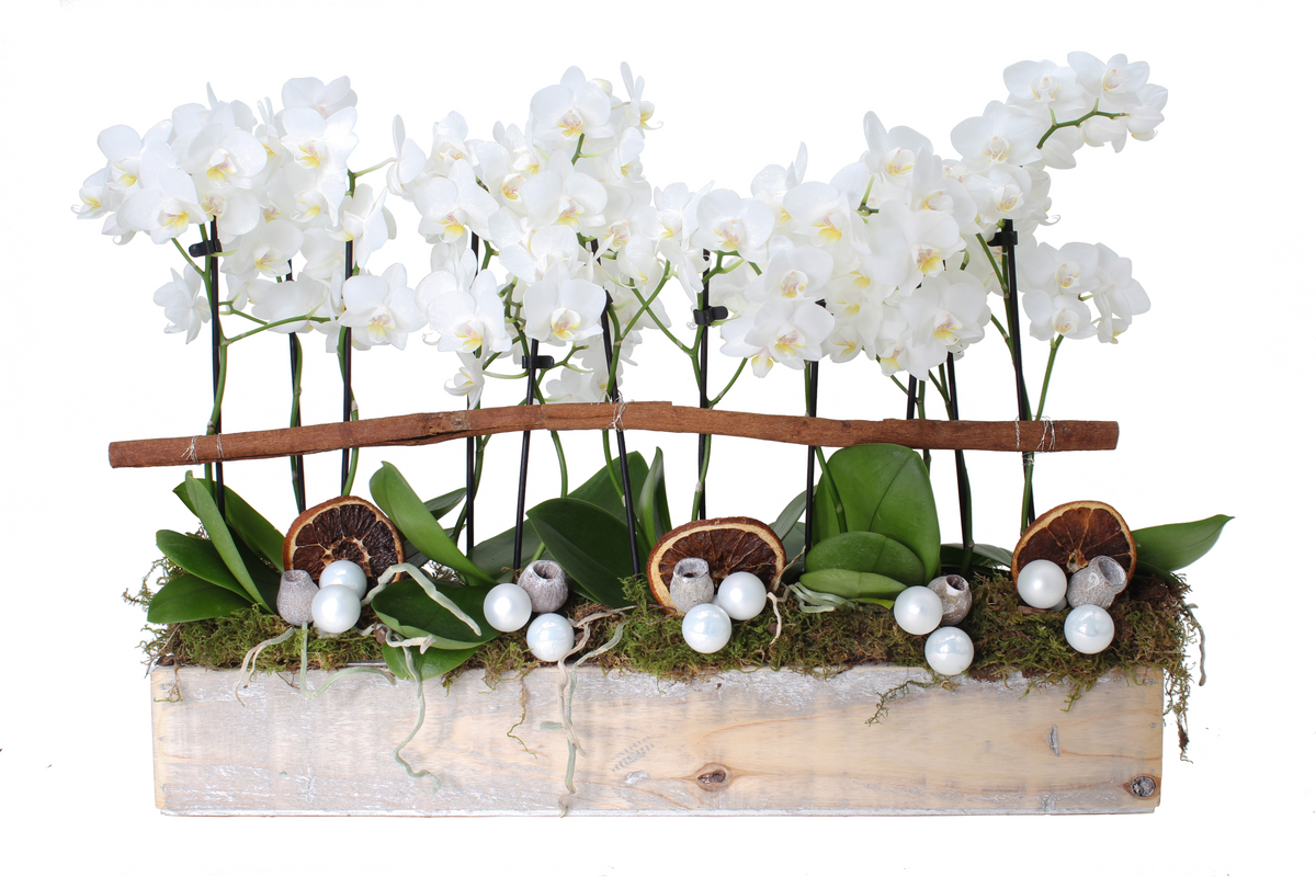 Mini Orchid Holiday Tablescape