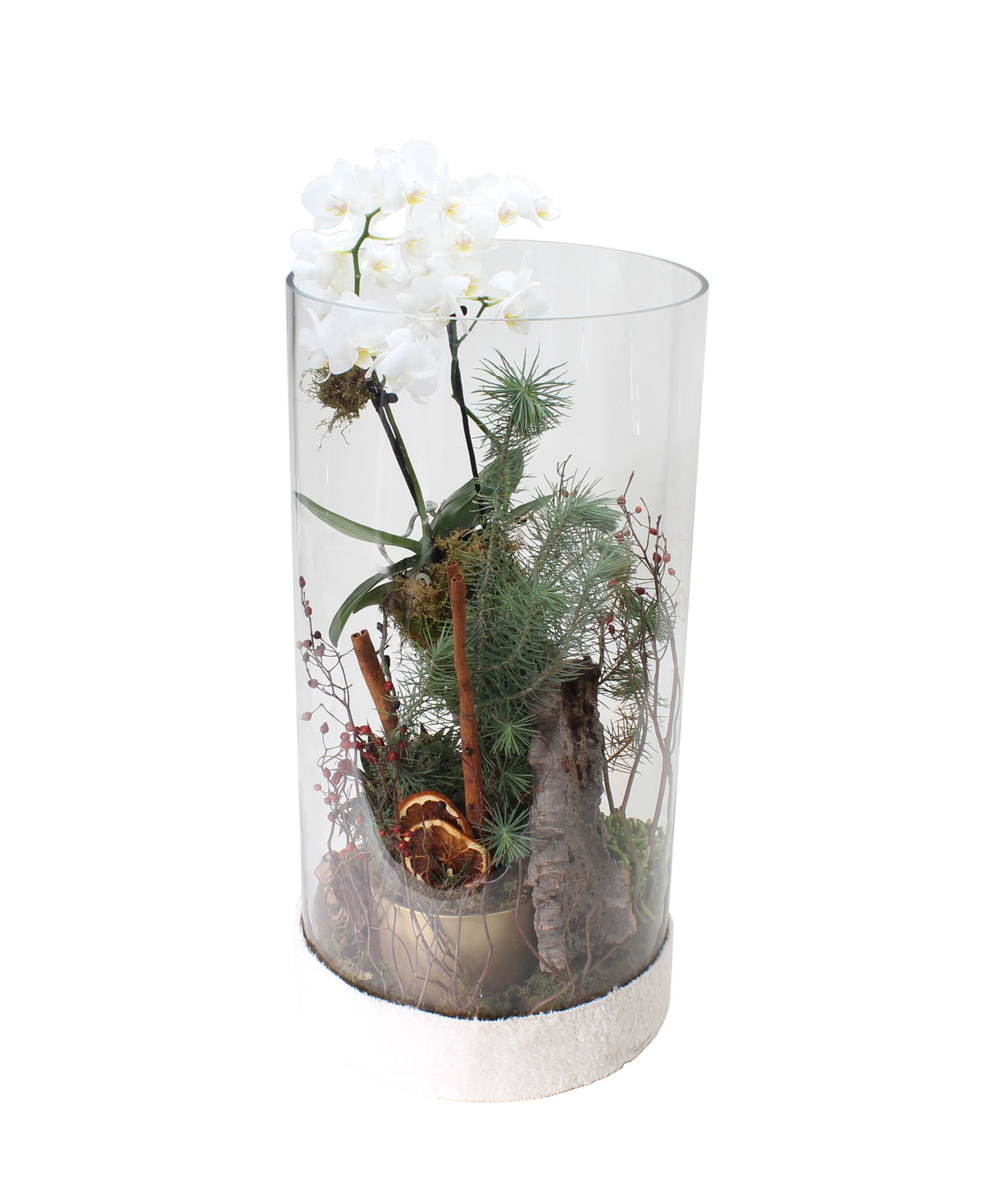 Holiday Orchid Terrarium