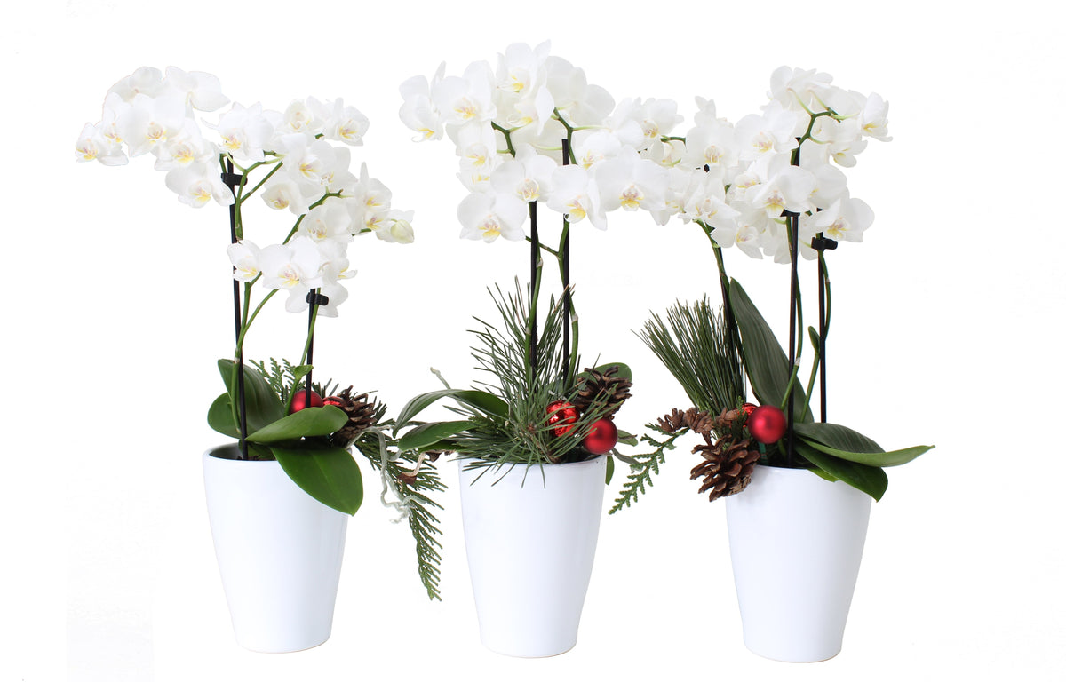 Holiday Orchid Trio Tablescape