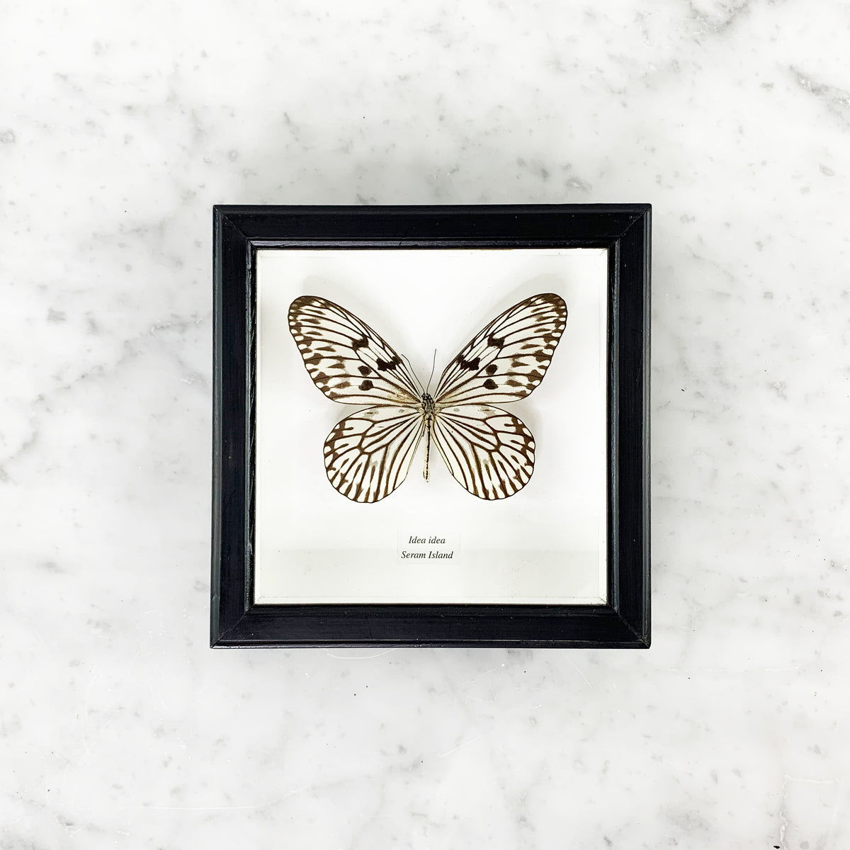 Framed Elegant Butterfly Collection