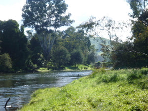 Goulburn River - Early Summer