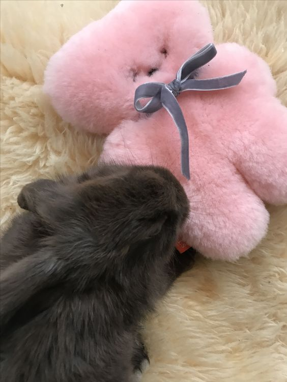 Pink Small Cuddle Bear