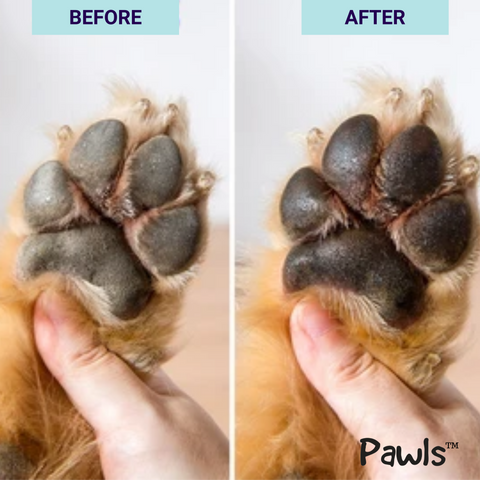 pawls dog paw balm before and after photo