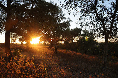 Montado Cork Oak Forest | YogurtNest