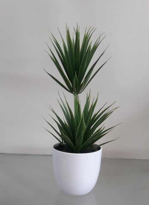 Two Succulent with Pot - Green Gardens Mihiliya (Pvt) Ltd