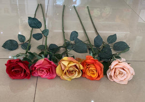 72cm Princess Rose