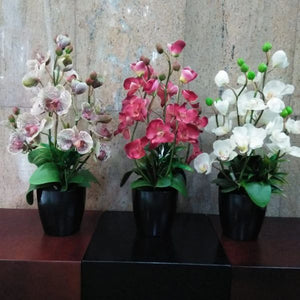 Real Touch Potted Orchid (M) - Green Gardens Mihiliya (Pvt) Ltd