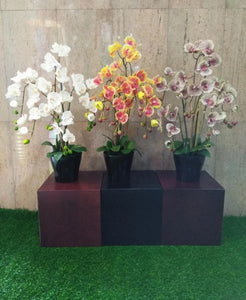 Real Touch Potted Orchid (L) - Green Gardens Mihiliya (Pvt) Ltd