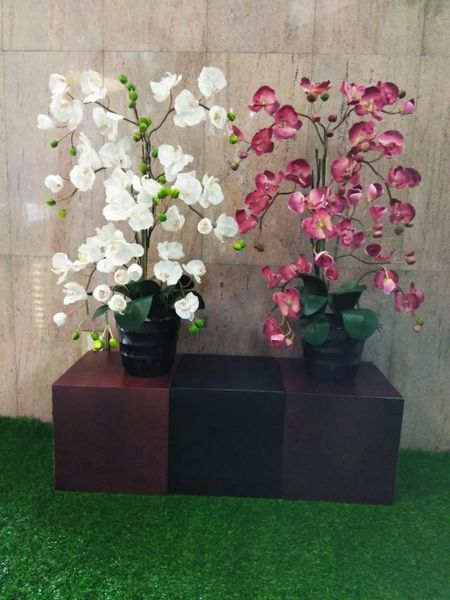 Real Touch Potted Orchid (XL) - Green Gardens Mihiliya (Pvt) Ltd
