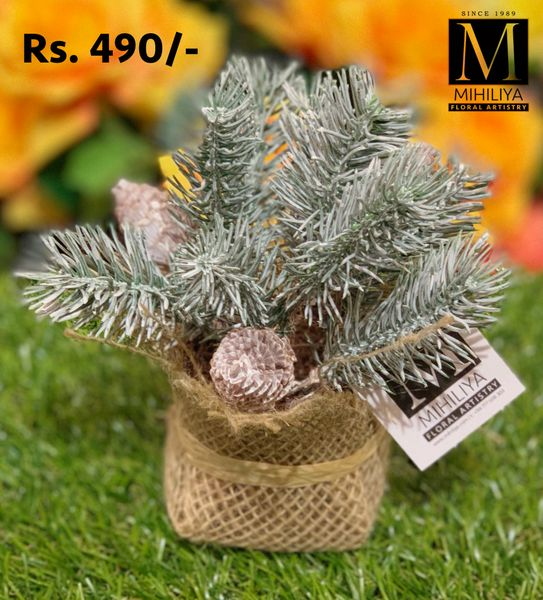 Mini Pine Cone & Frosted Grass 12CM - Green Gardens Mihiliya (Pvt) Ltd