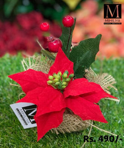 Mini Poinsettia & Berries 12CM - Green Gardens Mihiliya (Pvt) Ltd