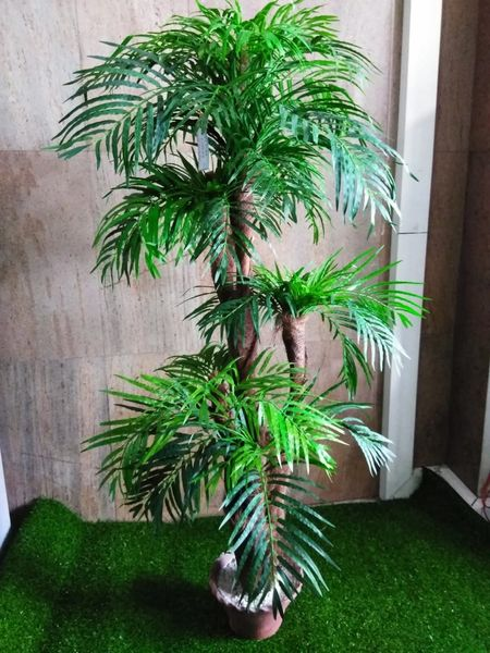 5ft Pearl Palm - Green Gardens Mihiliya (Pvt) Ltd