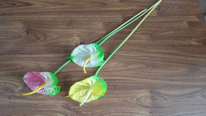 60cm Single Anthurium - Green Gardens Mihiliya (Pvt) Ltd