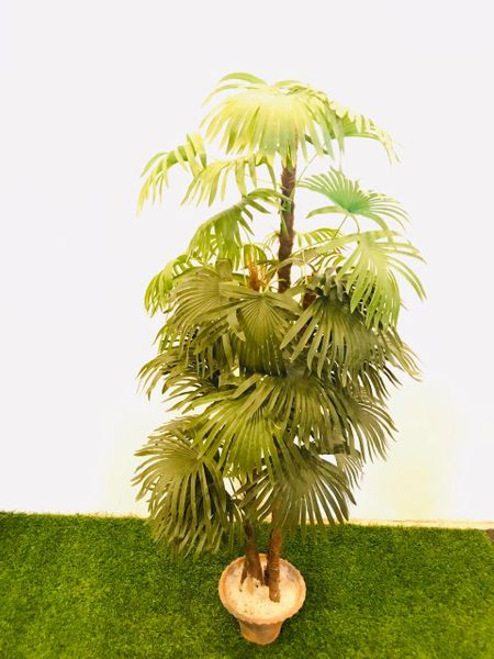 5ft Lady Palm (3 Cluster) - Green Gardens Mihiliya (Pvt) Ltd