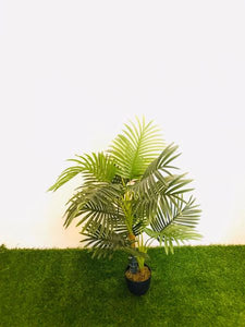 3.5ft Areca Palm - Green Gardens Mihiliya (Pvt) Ltd