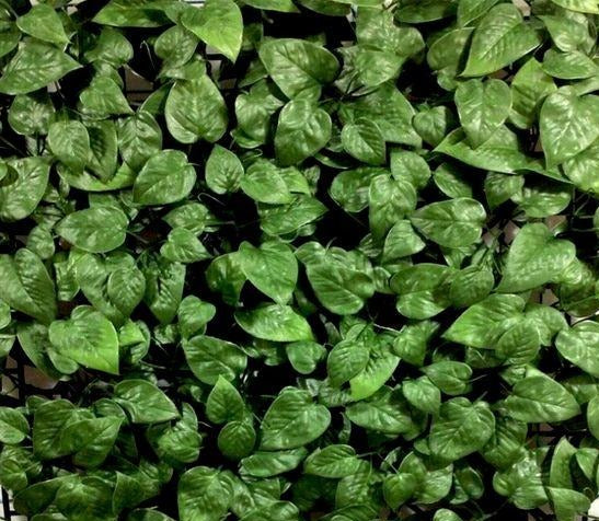 Mini Betel Leaf Vertical Garden with UV (SQM) - Green Gardens Mihiliya (Pvt) Ltd