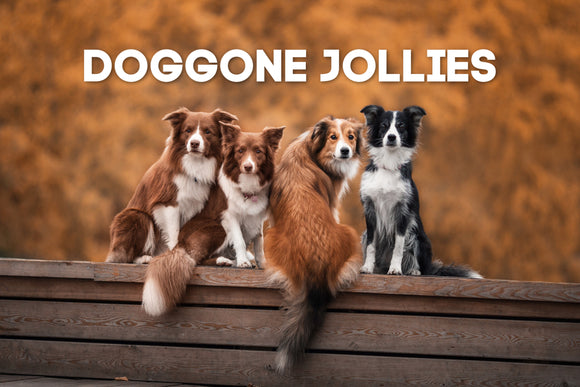 Doggone Jollies
