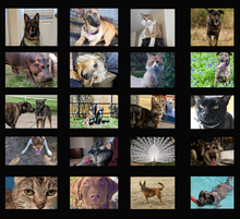 Load image into Gallery viewer, 20 Panel Photo Blanket
