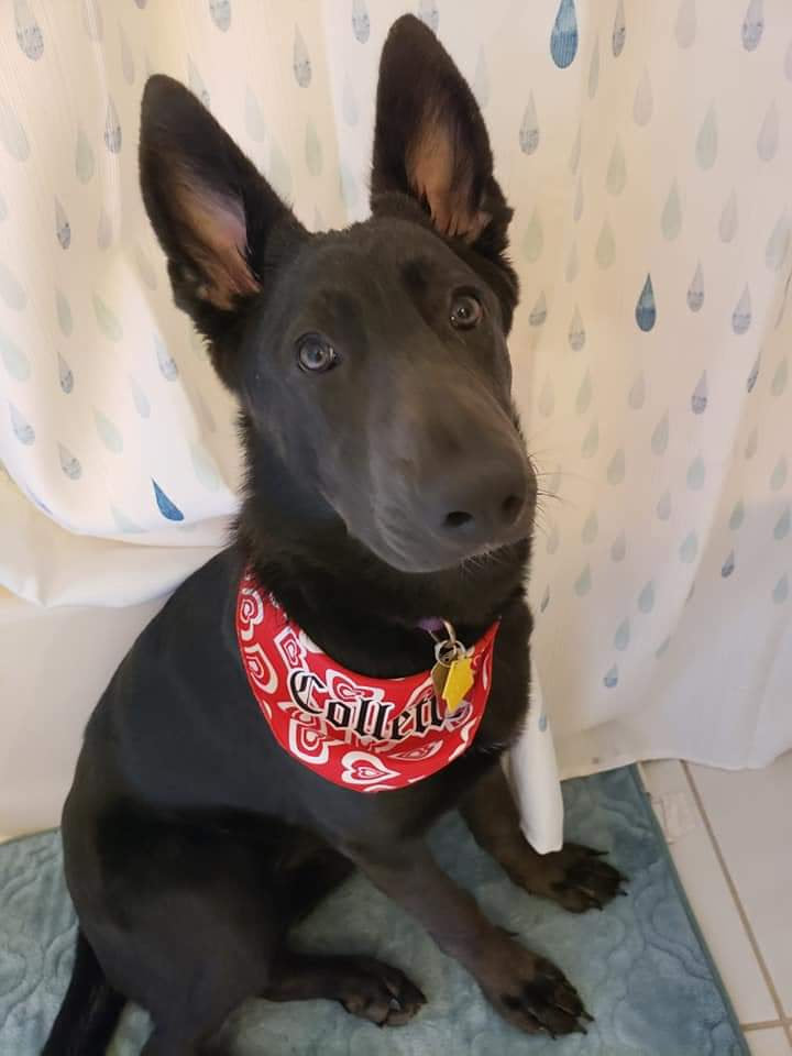 Personalized Dog Bandana Clip-Secured Collar