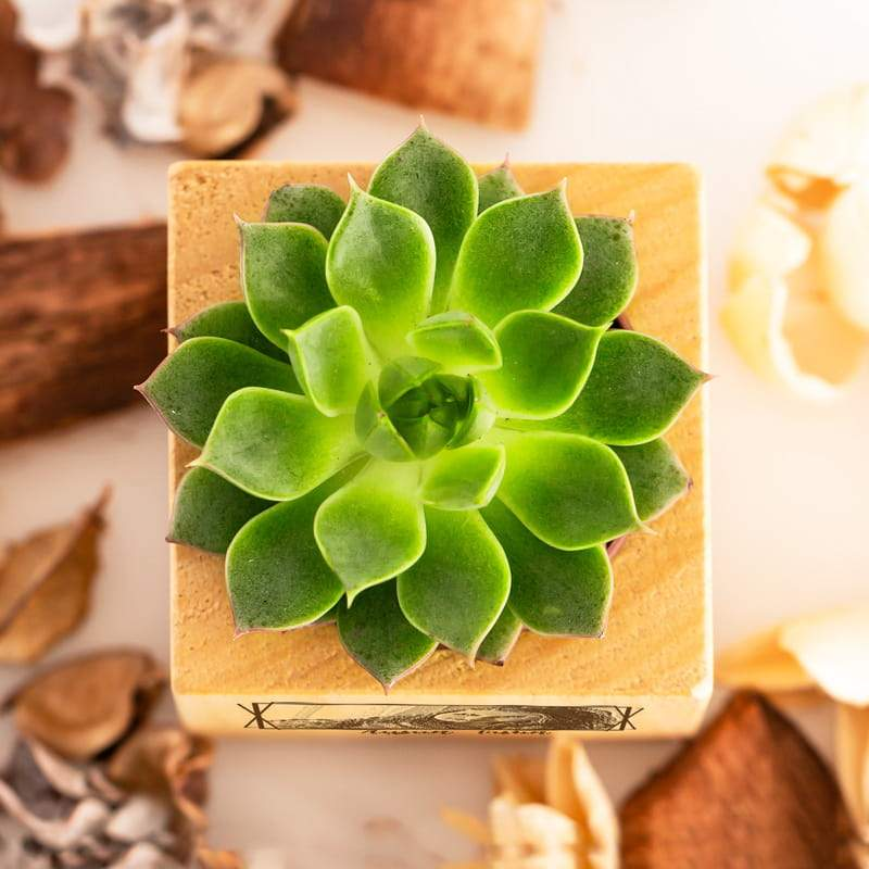 Personalized Succulent Plant Custom Fairy