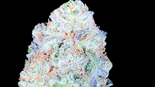 Zkittles Breath Regular Seeds Natural Genetic Seeds