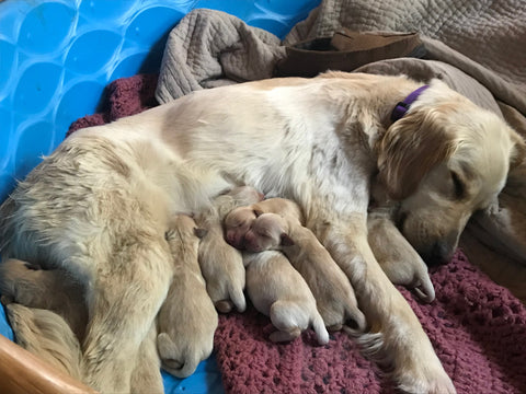 Litter of Puppies with Mom photo by Beth Millner Jewelry Ambassador Kate