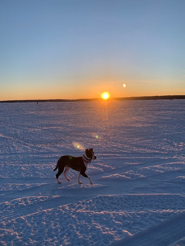 Beth Millner Jewelry Ambassador Paige's dog Zia playing in the snow