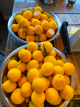 Load image into Gallery viewer, Addy's Meyer Lemon Marmalade - limited batched