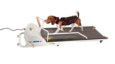GOPET PETRUN PR720F TREADMILL FOR DOGS UP TO 132 LBS - Pet Possibilities
