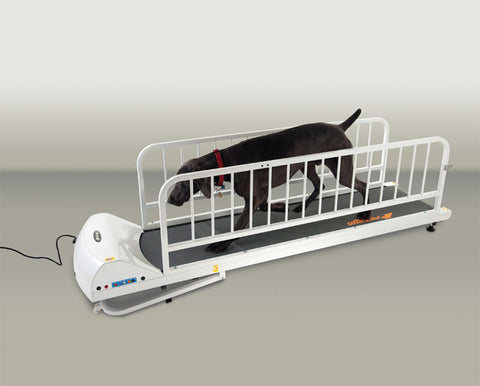 GOPET PETRUN PR725 ENCLOSEABLE TREADMILL FOR LARGE DOGS UP TO 176 LBS - Pet Possibilities