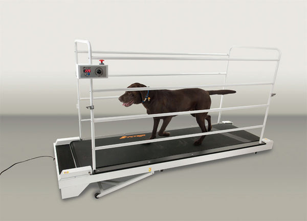 GOPET PETRUN PR730 ENCLOSEABLE TREADMILL FOR LARGE DOGS UP TO 264 LBS - Pet Possibilities