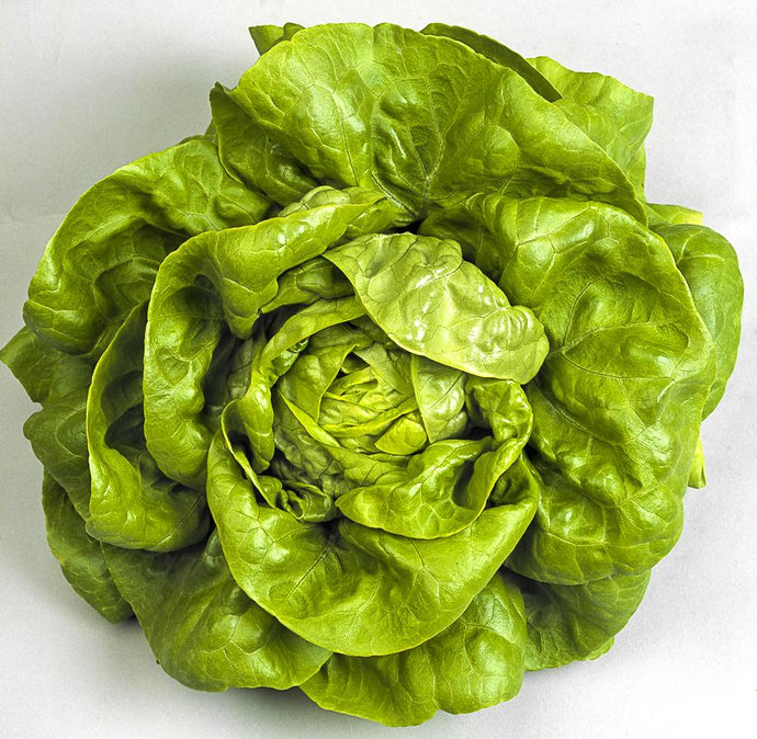 Bentley Mill's Buttercrunch Bibb Lettuce - A Good Story Foods